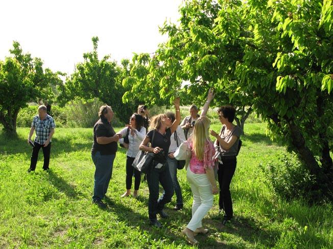 Tourisme made in france paris c te d 39 azur for Le jardin d alix lille