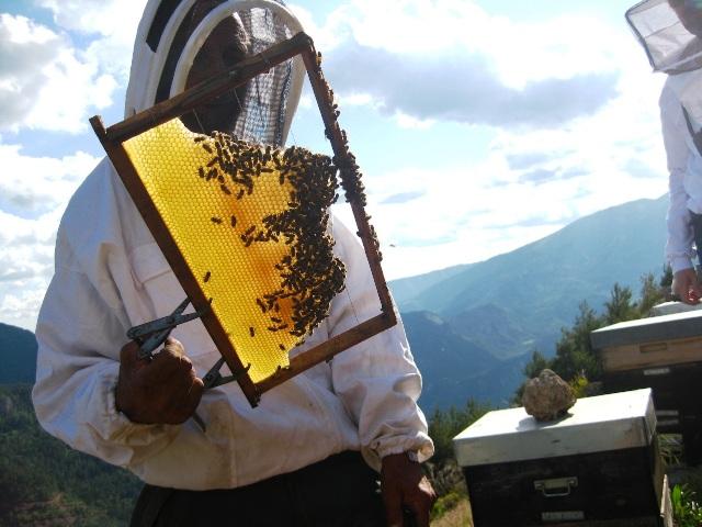 apiculteur alpes maritimes
